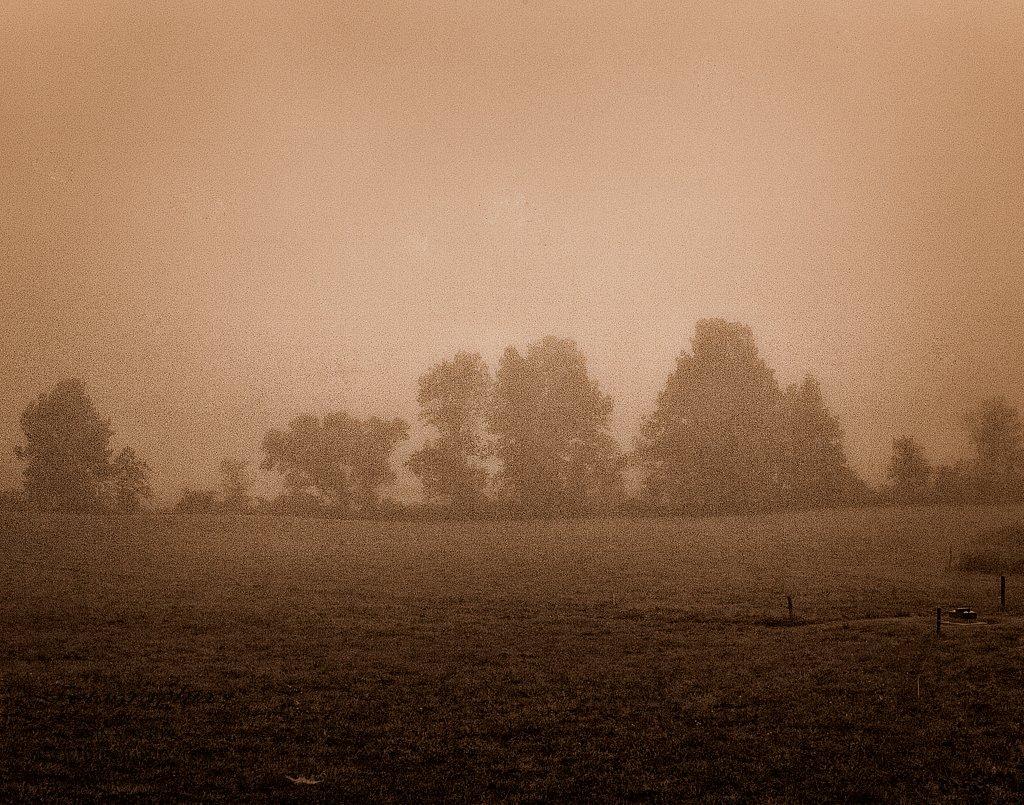 Pasture in the Fog