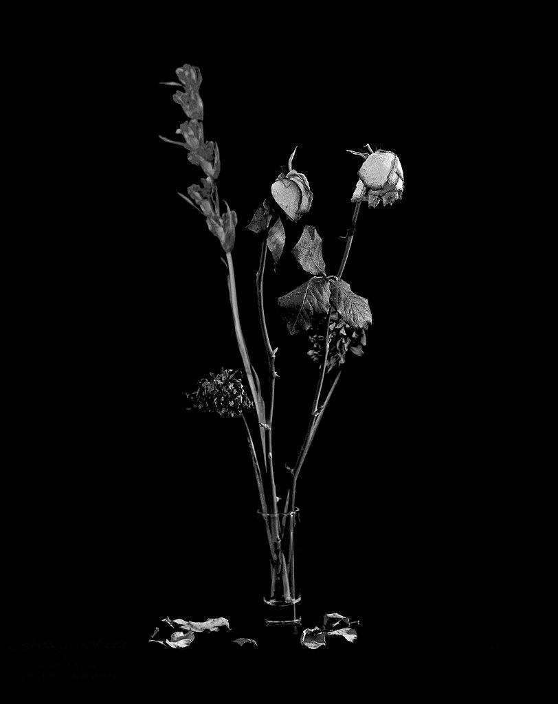 Dried Flower Arangement