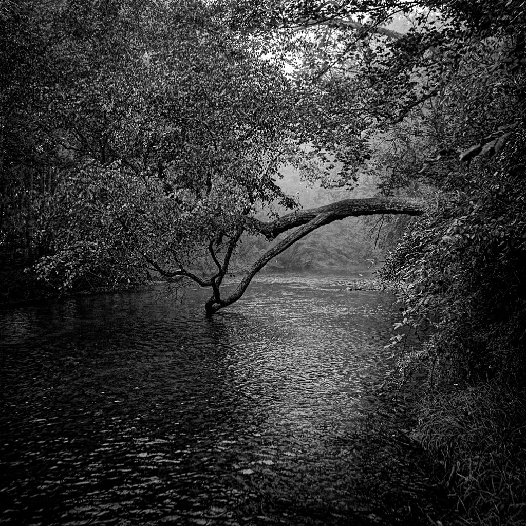 River Tree (Revisited)