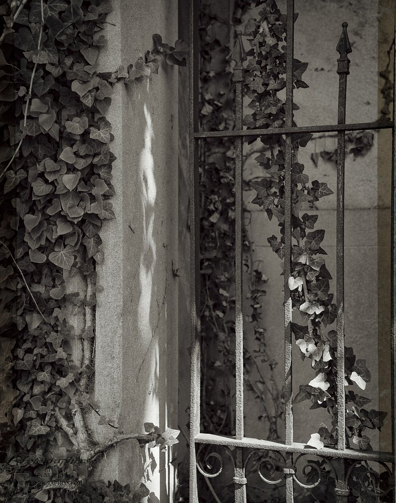 Ivy-and-Iron.jpg