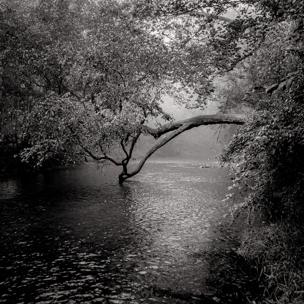 River-Tree.jpg